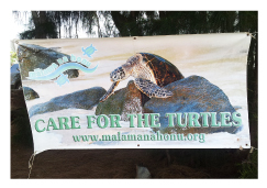 CARE FOR THE TURTLES